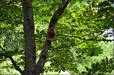 jardin_biodiversite_visuel_3.jpg