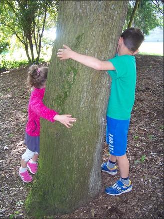 180515_arbres_remarquables_visuel_2.jpg