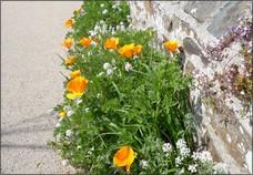 Image de jardin de trottoir